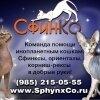 СфинКо: команда помощи инопланетным кошкам