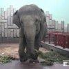 В Екатеринбурге устроили праздник для слона