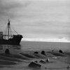 Как погиб Американский китобойный промысел: репортаж с места крупнейшей в истории китобойного флота катастрофы -  полтора века спустя
