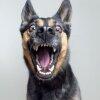 Утвердить выгул собак исключительно в намордниках предложил известный российский юрист Павел Астахов