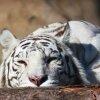 у Московского зоопарка скоро появится гимн